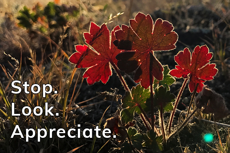 gratitude moment: stop look appreciate - Happier Place