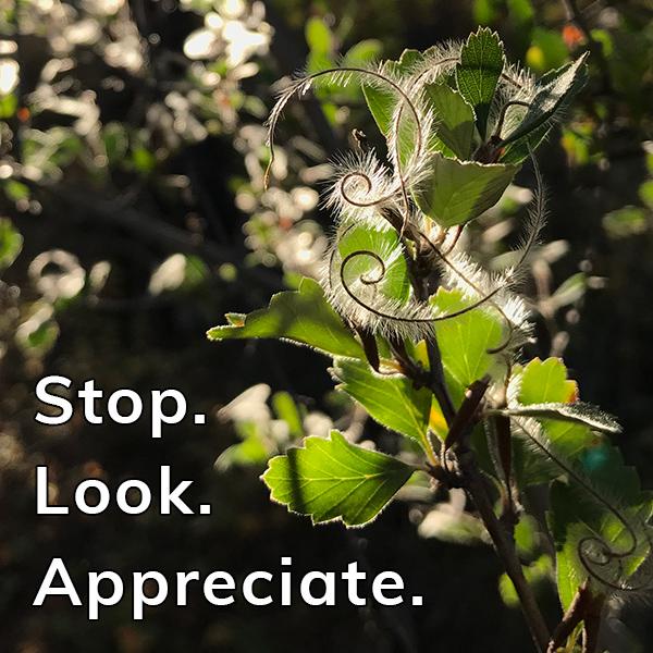 Happier Place Gratitude Moment: stop. look. appreciate.