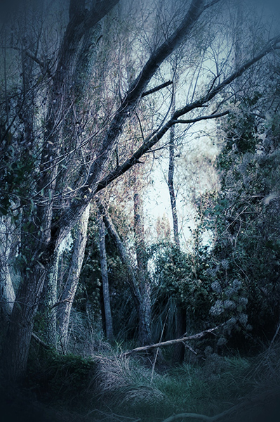 From The Path (Photo by Maire Thompson) - Happier Place