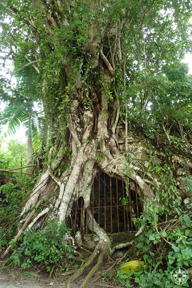Tree jail: remnants of the former leper colony and secondary prison on Ilha Grande.