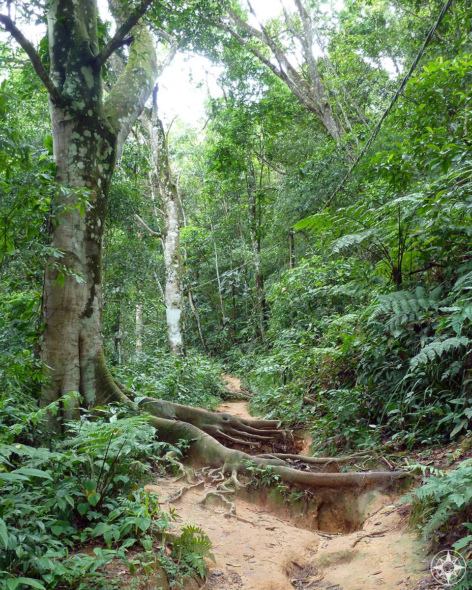 Muddy rainforest trail through the hills of Ilha Grande, Brazil. Happier Place