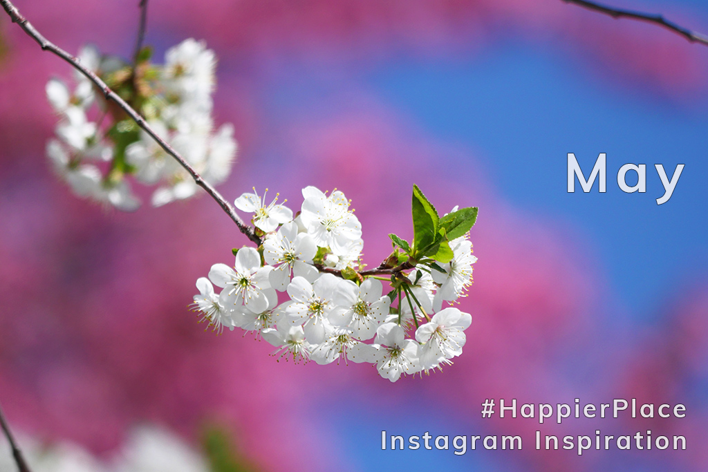 Spring blossoms for Happier Place Instagram Inspiration May 2018