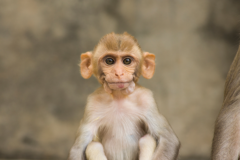 Indian monkey photographed by John of Lost & Found Travel - Happier Place