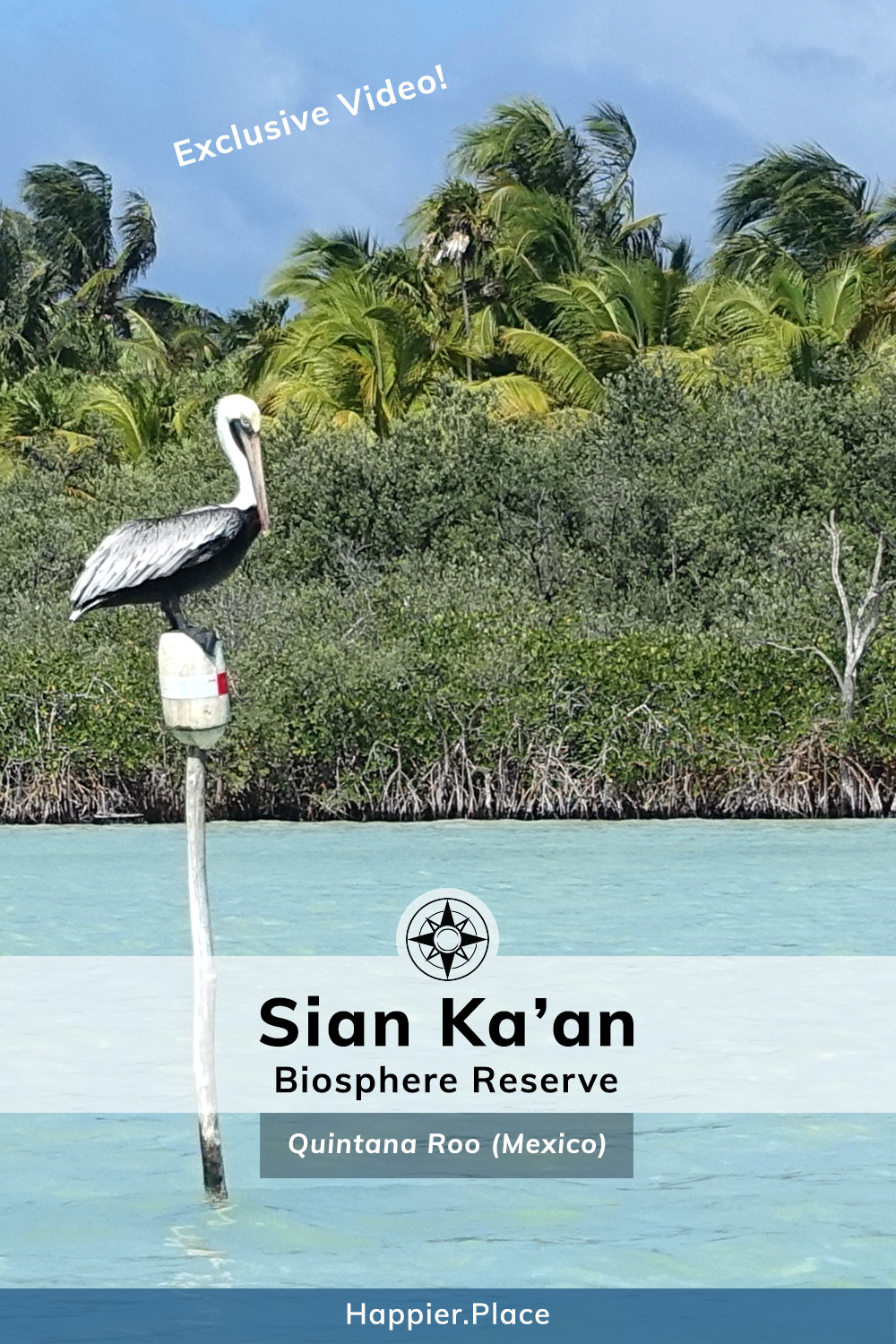 Sian Ka'an Biosphere Reserve, Tulum, Mexico, Quintana Roo, Yucatan Peninsula, Happier Place, pelican, clear water, jungle, video