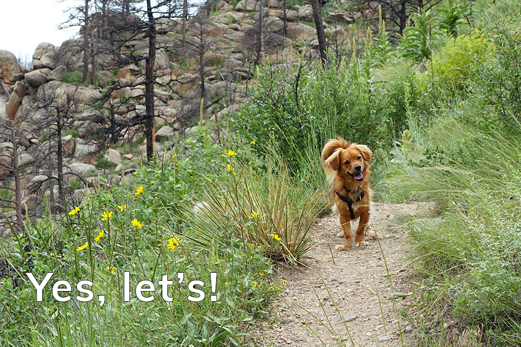 Inviting Happiness and Adventure: Yes, let's! - Happier Place