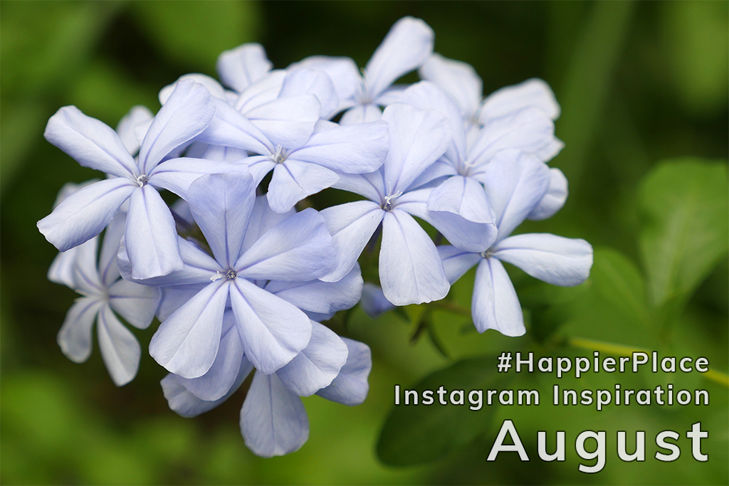 Flower photo by Luci Westphal representing a few of our favorite Instagram photos tagged #HappierPlace in August.