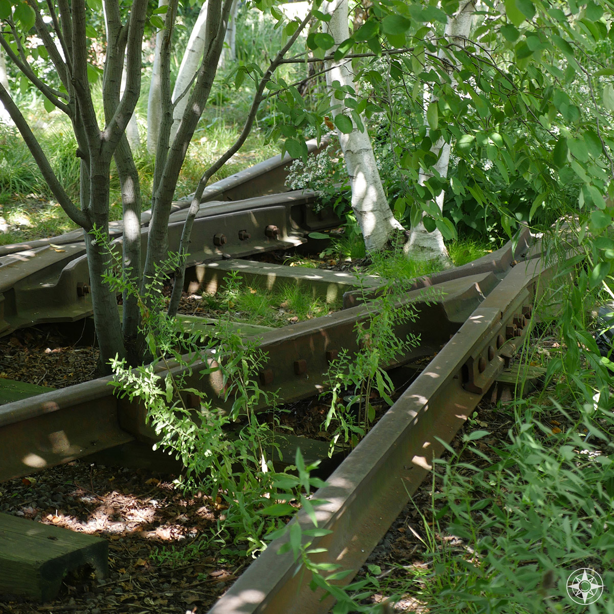 Overgrown tracks of the elevated freight rail line 30 feet above the streets of Manhattan.