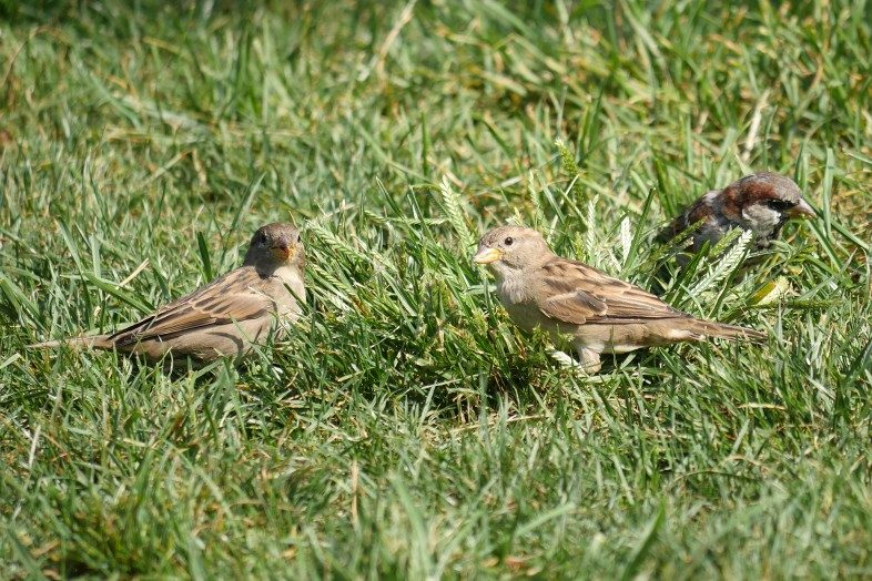 Even the New York City sparrows get to enjoy a break along the green lawns, trees, flowers and shrubs of the park. Happier Place