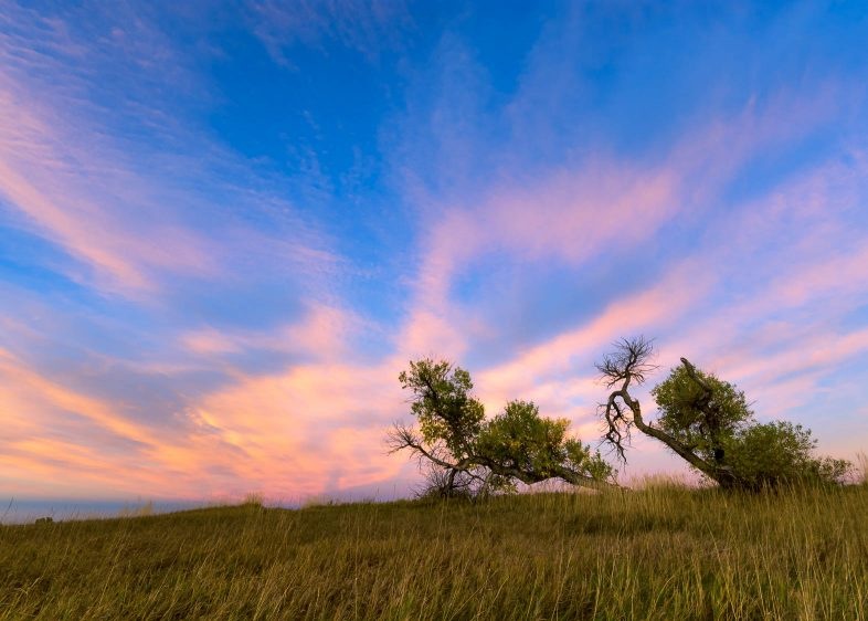 Trees against colorful sky in Fort Collins. Photo by Bryan Clark.