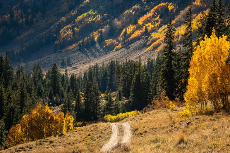 Trail road in the Rocky Mountains during colorful fall. Photo by Bryan Clark.