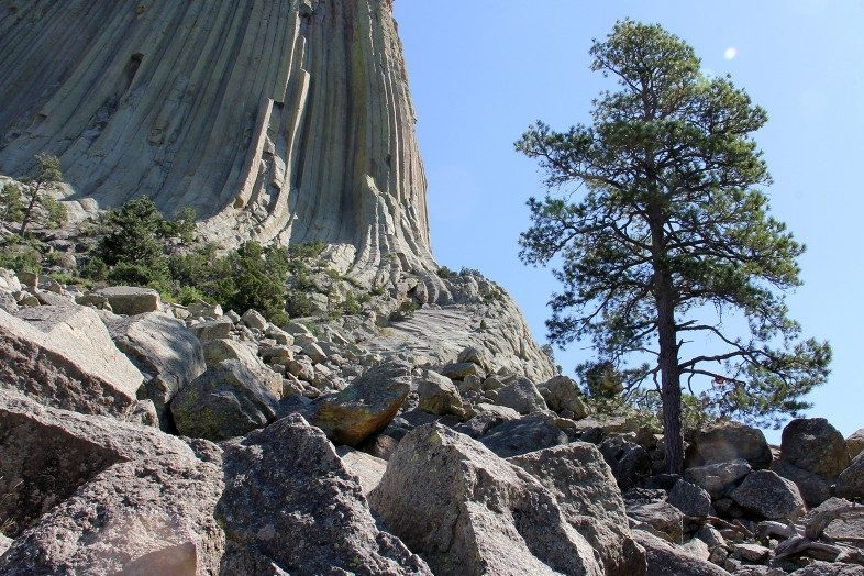 Tree growing out of the rocks of Devils Tower.