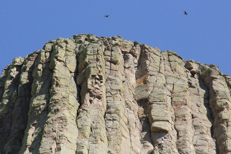 Birds of prey circling above the summit.
