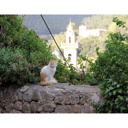 Cat in Mallorca - 2019 Nature Calendar - Happier Place