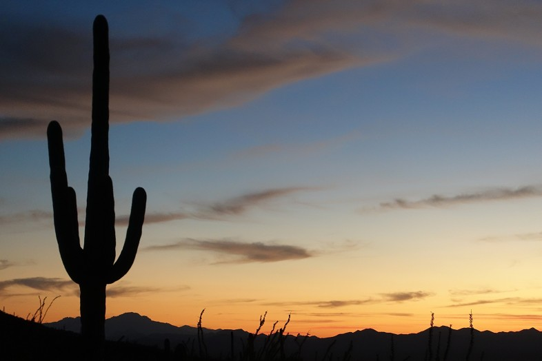 Saguaro cactus at sunset in Saguaro National Park Arizona - Happier Place