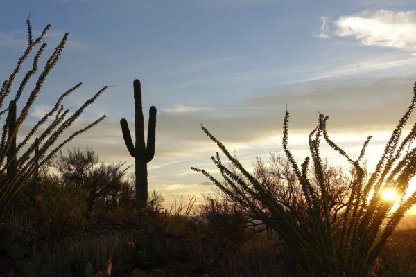 Sunset is an ideal time to visit Saguaro National Park outside Tucson, Arizona.