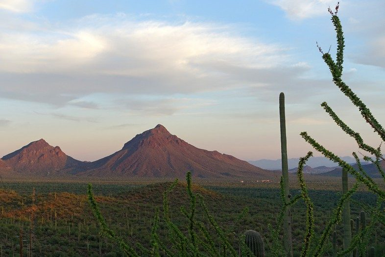 Valley dotted by Saguaro cacti outside Tucson, Arizona.
