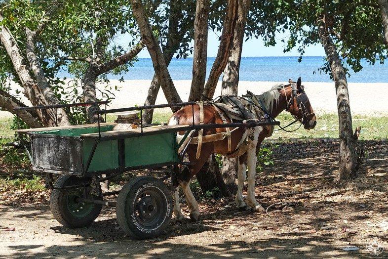 Horse and cart just off the beach in La Boca, Cuba.