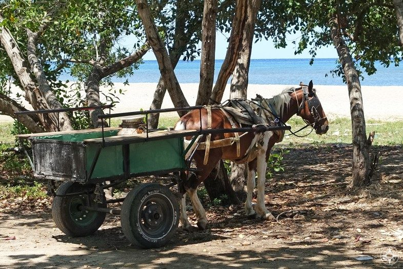 Horse and cart just off the beach in La Boca, Cuba.