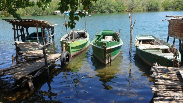 Small boats lined up along the Rio Guaurabo, Cuba.