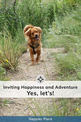 dog hike trail happiness yes let's