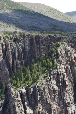 Green life along the Black Canyon