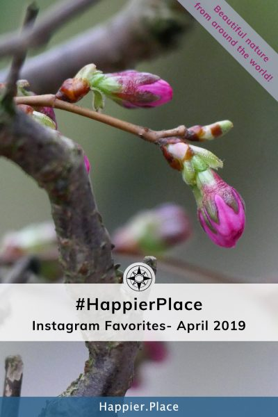 April round-up of our favorite #HappierPlace photos on #Instagram!  Represented here by pink spring buds of an almond tree in Germany.