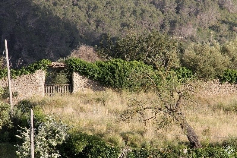 Fallen wall, gate and tree: rustic old farm charm along the road on Mallorca.