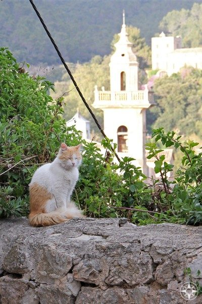 Cat resting on a wall in front of the Valldemossa monastery tower.