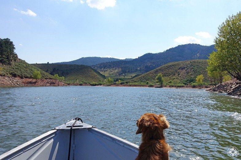 Whiskey Dog boating on Horsetooth Reservoir, Colorado.