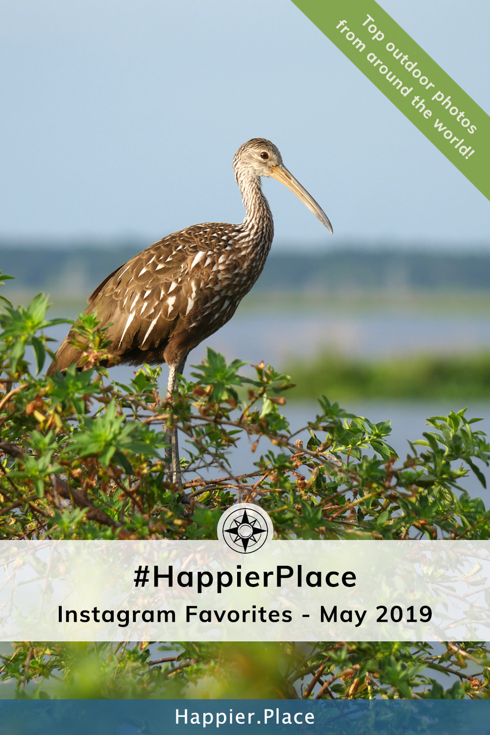 Limpkin in Florida representing  #HappierPlace Instagram Favorite Photos for May 2019 
