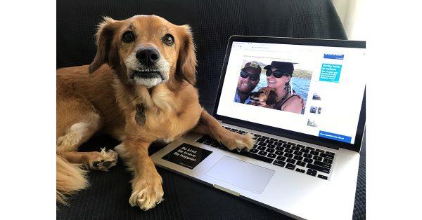 whiskey dog with laptop