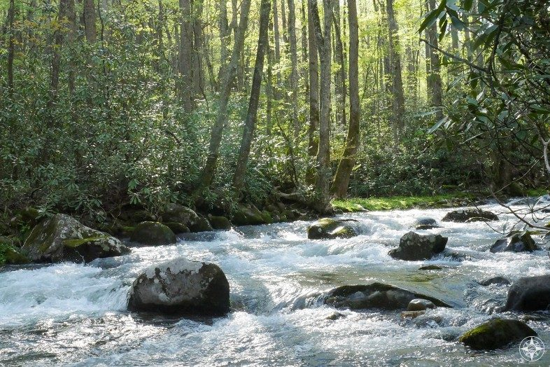Streams full of trout and bass lure fly fishermen to the Smoky Mountains.