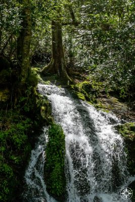 A snowmelt waterfall cascades down along Newfound Gap Road in Great Smoky Mountains National Park.