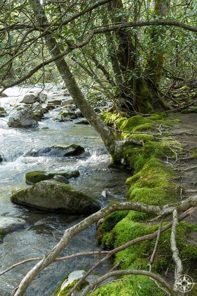 Chasteen Creek in Smoky Mountains NP