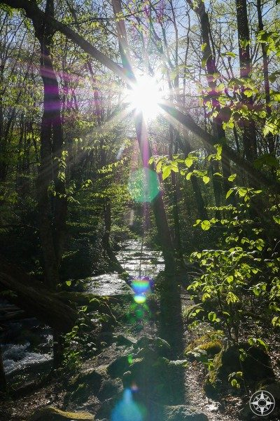 Sun flare through the forest and small creek glistening.