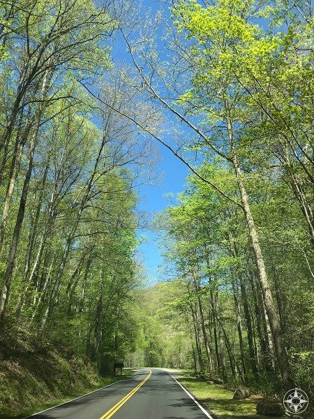 Scenic spring drive on Newfound Gap Road connecting Tennessee and North Carolina