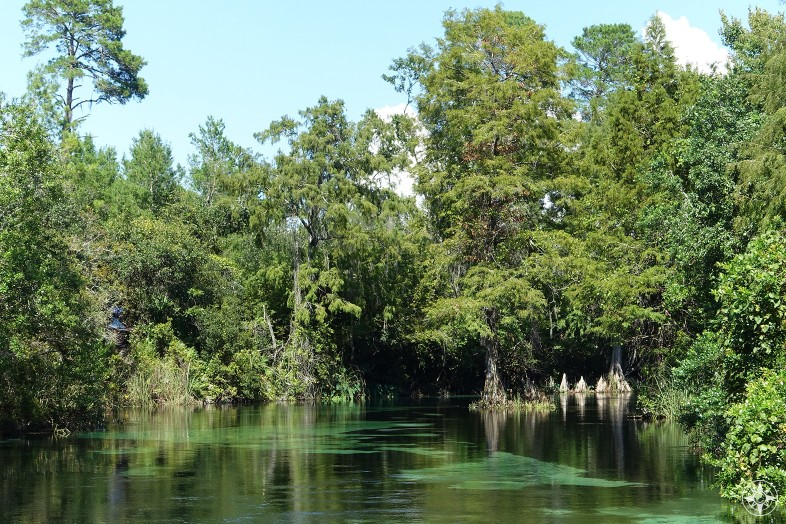 Weeki Wachee Springs and River in Florida - Meet Mermaids, swim in a natural spring and paddle the crystal clear river.