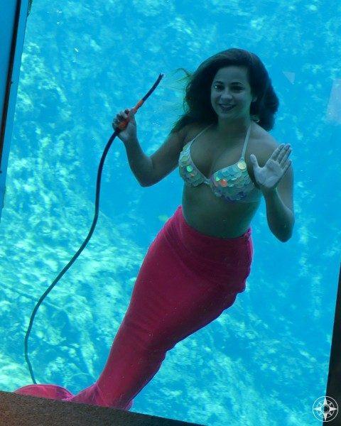 Mermaid at the glass in Weeki Wachee Springs