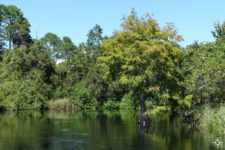 Lush green surrounds the Weeki Wachee River.