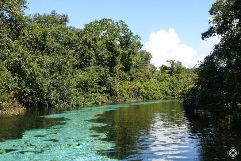 """Discovering the """"Real Florida"""" by paddling along the cool spring-fed Weeki Wachee River on crystal-clear water."""