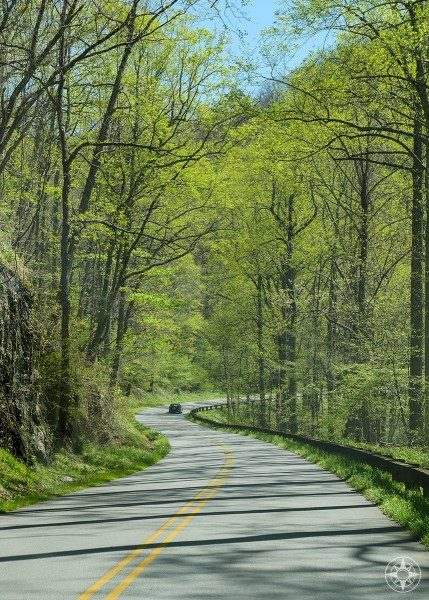 Blue Ridge Parkway winds through springtime forest