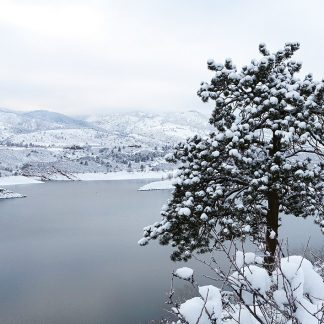 Snow-covered tree over snowy lake, Colorado, postcard