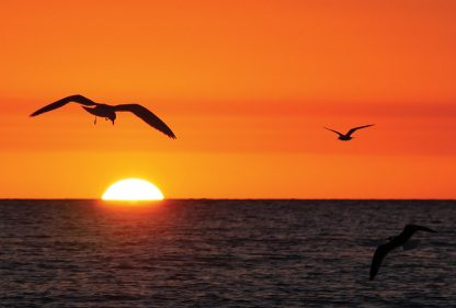 seagull sees sunset, Madeira Beach, Florida, sunset postcards
