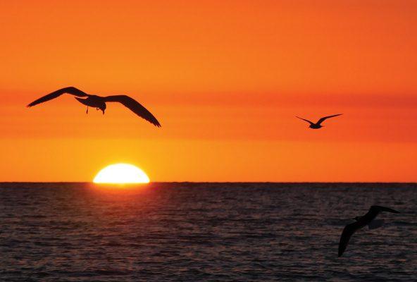 seagull sees sunset, Madeira Beach, Florida, sunset postcards