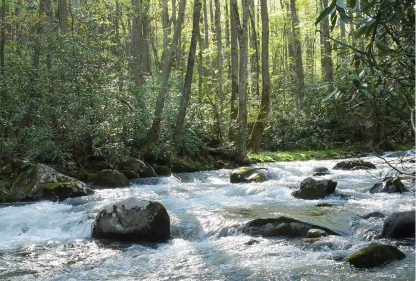 Forest Rocky River, Smoky Mountains National Park, North Carolina, postcard