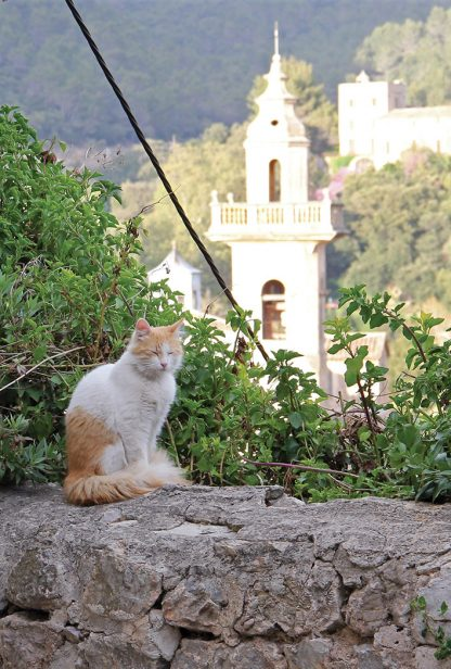 cat, Valldemossa, Mallorca, Spain, postcard