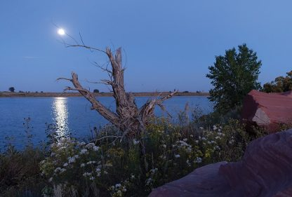Full moon over lake with wildflowers, Colorado, Douglas, super moon, postcard