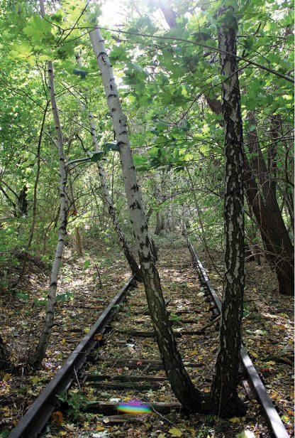 birch trees grow among train tracks, berlin, germany, postcard, suedgelaende