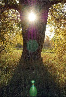 fall foliage sun tree, autumn lives, postcard