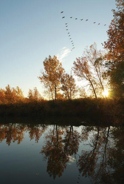 migrating birds, lake reflection, postcard